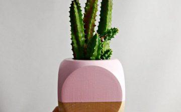 KAKTUS-LOVER-dekoracna-kaktusova-senzacia-florashop-03-thumb